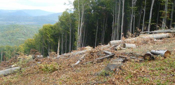 Торгівля лісом на Прозорро